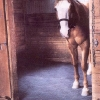 Rubber Matting - Horse Stable